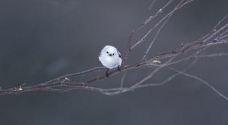Почему птицы не падают с ветки, когда спят