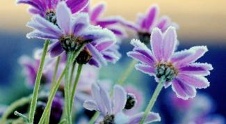 Чтобы цветы не завяли…