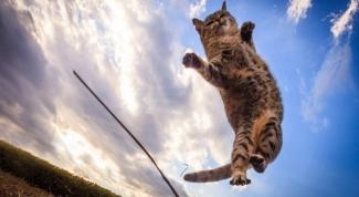 Как кошкам удается не разбиться, упав с большой высоты