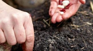 Причины плохой всхожести семян