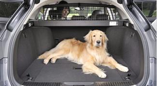 Как сделать так, чтобы собаку в машине не укачивало