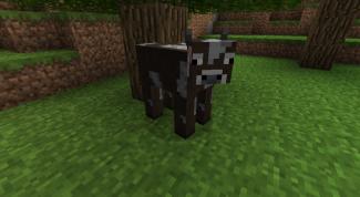 Как приручить корову в Майнкрафт