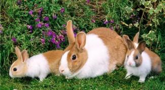 Почему кролики бросают своих детей