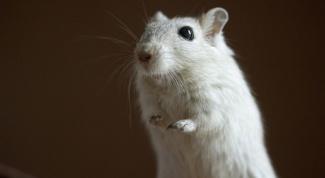 Чем отличаются оптическая и лазерная мышь