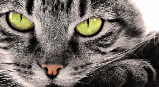 Что видит кошка в темноте