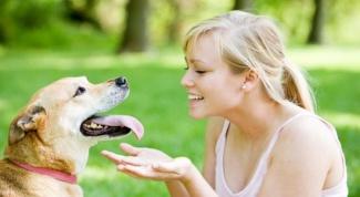 Что делать, чтобы собака не пахла псиной