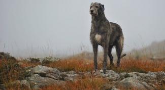 Какие собаки самые мощные и сильные