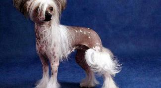 Сколько видов собак существует в мире