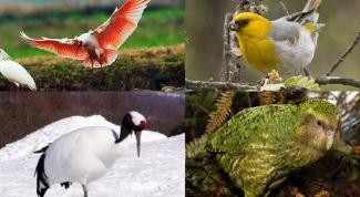 Какие птицы самые редкие