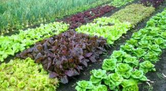 Как сделать землю плодородной