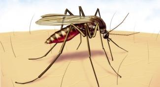 Чем мазать укусы комаров маленькому ребенку