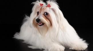 Сколько живут собаки разных пород