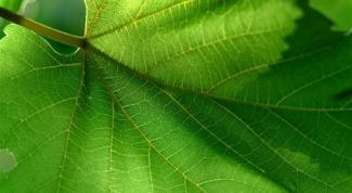 Что такое растительная ткань