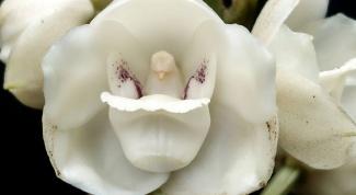 Необычные орхидеи (часть 2)