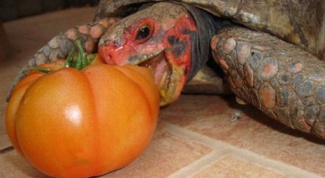 What eat turtles