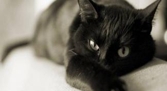 Что делать, если у кота отнимаются задние ноги