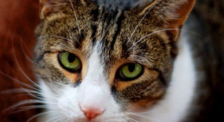 Why an adult cat started shitting on the bed