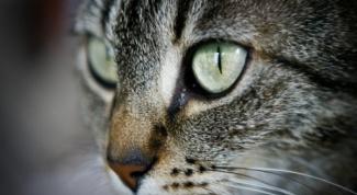 Что делать, если кота рвет желчью