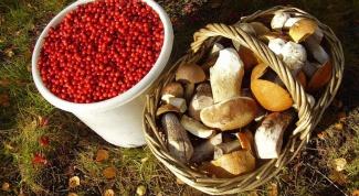 Сколько времени нужно варить грибы