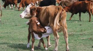 Лечение домашнего скота травами