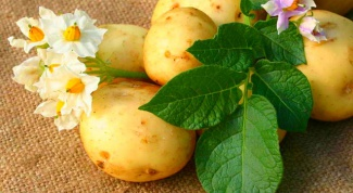 How to sprout potatoes for planting