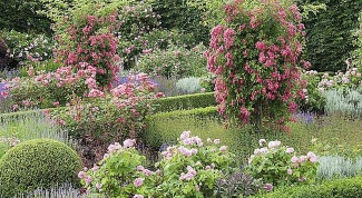 Как создать сад ароматов
