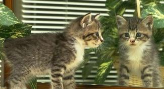 Как вылечить кота от ушного клеща