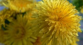Майская зелень на нашем столе: простые травы для пользы и удовольствия