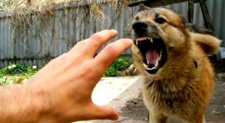 Как вести себя при встрече с агрессивной собакой