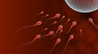 Как рассчитать овуляцию для зачатия