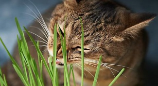 Что делать, если кошка отравилась комнатным цветком