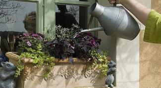 Удобрения для растений в горшках