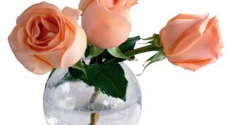Что нужно, чтобы розы дольше стояли в вазе