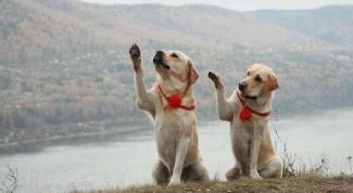 Игра - лучший метод обучения собак