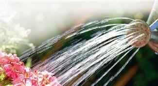 Как уберечь растения в жаркую погоду