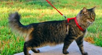 Как приучить кота гулять на улице