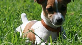 Какой породы собака из фильма «Маска»