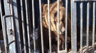 Как взять опеку над диким животным в зоопарке
