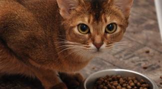 Как рассчитать порцию еды для кота