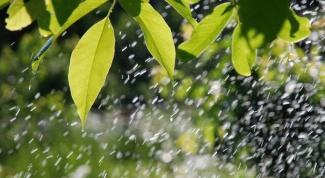 Почему даже небольшой дождь гораздо эффективнее любого искусственного полива?