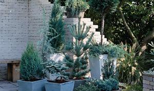 Как посадить дерево в горшок