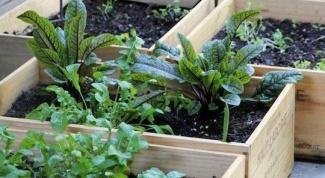 Как использовать овощи в контейнерном озеленении