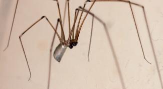 Способы избавления от пауков в квартире