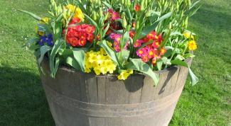 Как использовать цветы в контейнерном озеленении