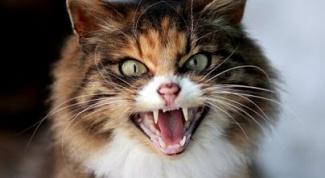 Как расчесать кошку, если она сопротивляется