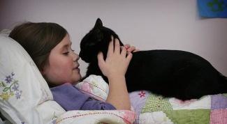 Как приучить ребенка ухаживать за домашними животными