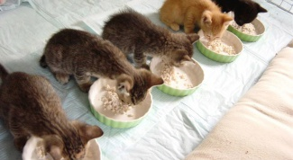 What to feed kittens dry food or food from the table?