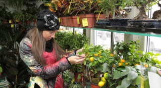 Как ухаживать за комнатными растениями
