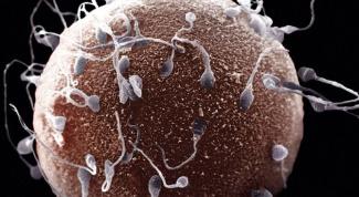 Как происходит процесс зачатия