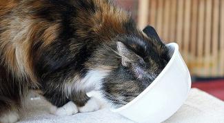 Как влияет сухой корм на здоровье кошки